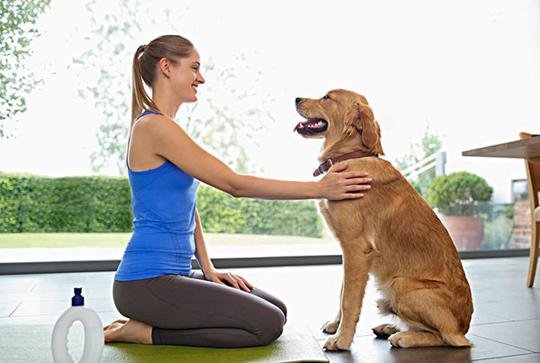 狗狗跟陌生人走的2种原因及纠正方法